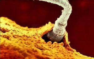 Ένα από τα διακόσια εκατομμύρια σπερματοζωάρια του πατέρα διαπερνά την μεμβράνη του ωαρίου.