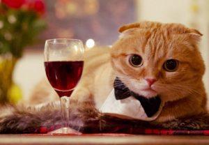 pinotmeowthecatwineforcats-2330