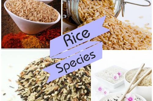 rice_species