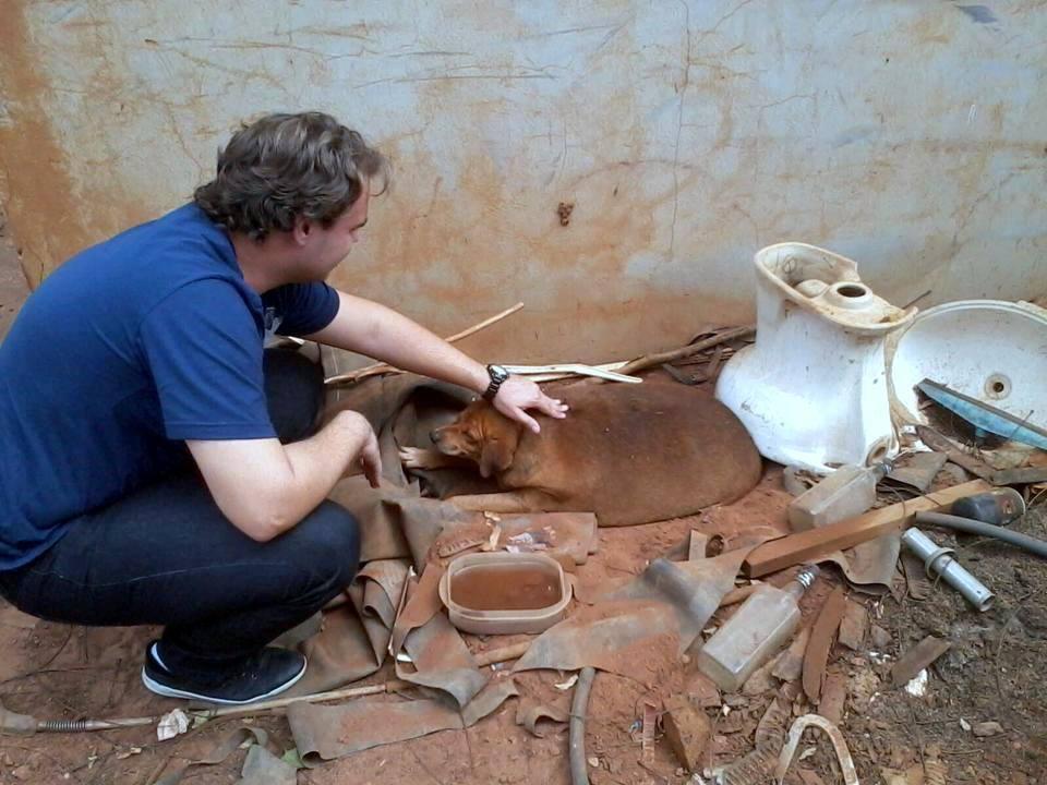 Ο διασώστης που προερχόνταν από μια κοντινή πόλη όπου άκουσε για την ιστορία του σκύλου, πήγε στο βενζινάδικο και τον βρήκε ανάμεσα σε σωρούς από σκουπίδια και μπάζα.