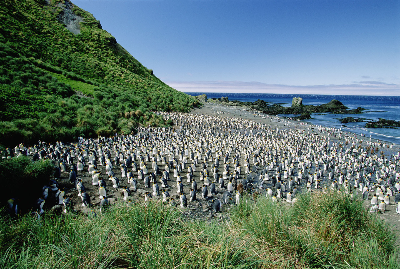 Το μικροσκοπικό πράσινο νησί όπου κυριαρχούν οι πιγκουίνοι