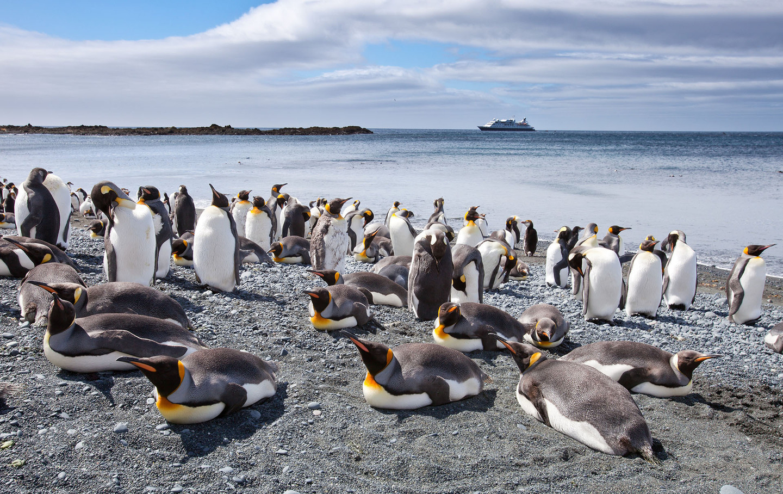 04 Dec 2009, Macquarie Island, Tasmania, Australia --- King penguin colony on Macquarie Island in Australia --- Image by © Nick Rains/Corbis